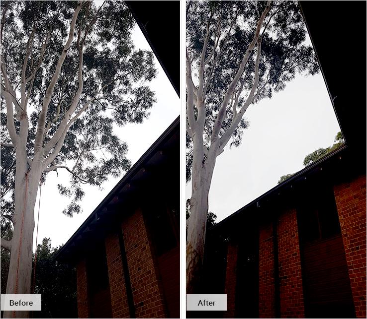 Tree Pruning Service Sydney