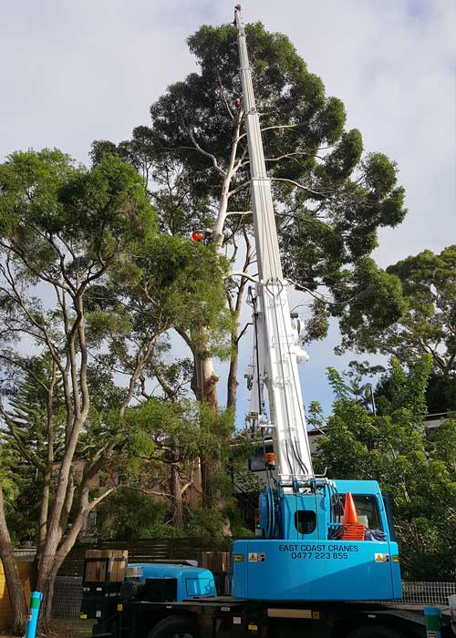 Tree Service North Shore