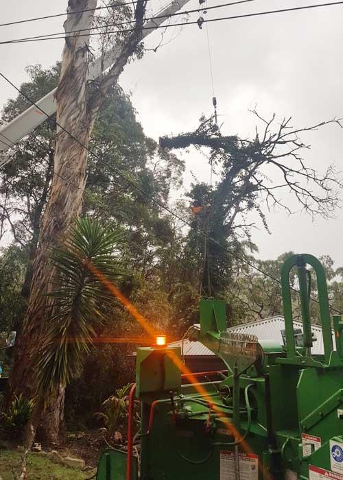 Sydney Tree Services