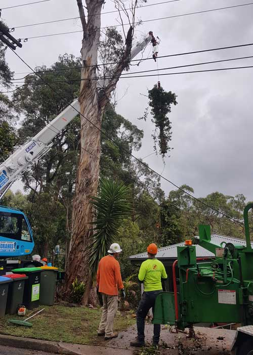 Tree Service Northern Beaches