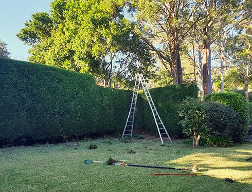 Hedging Service Sydney
