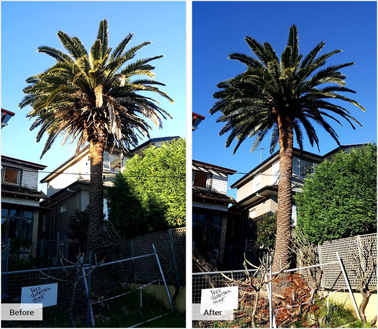Palm Cleaning and Removal Service