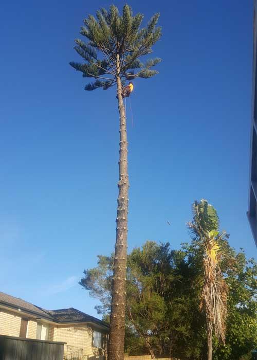 Northern Beaches Tree Service