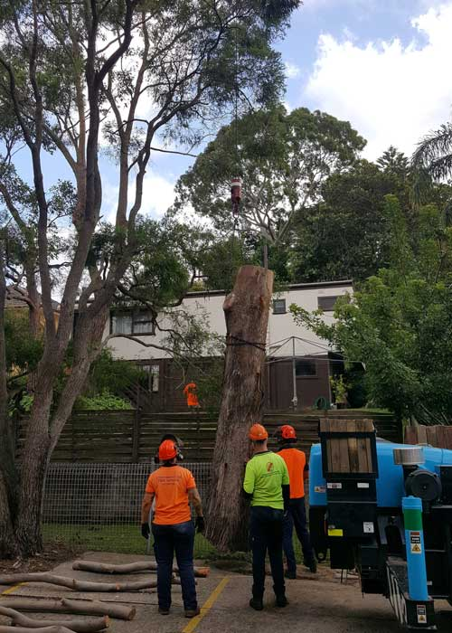 Tree Service Sydney